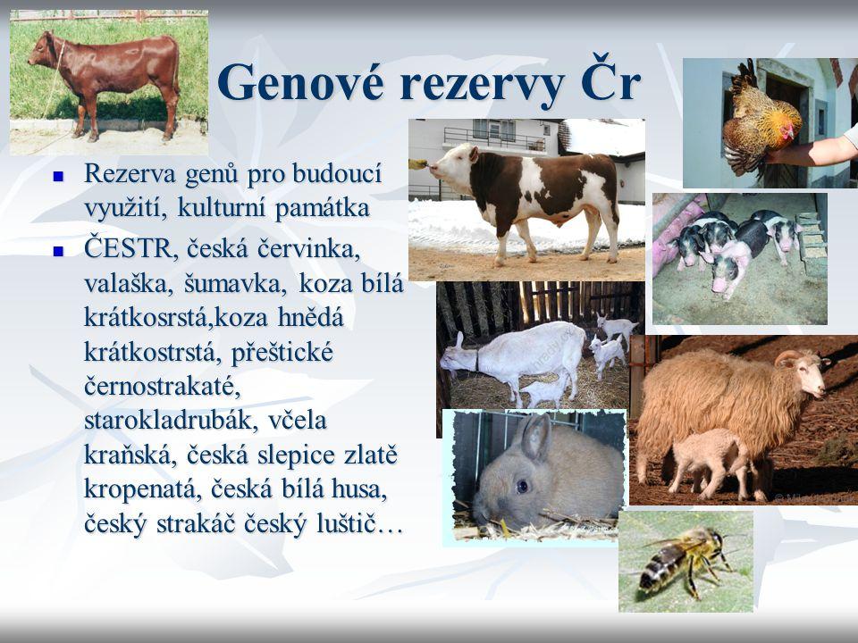 Genové rezervy Čr Rezerva genů pro budoucí využití, kulturní památka