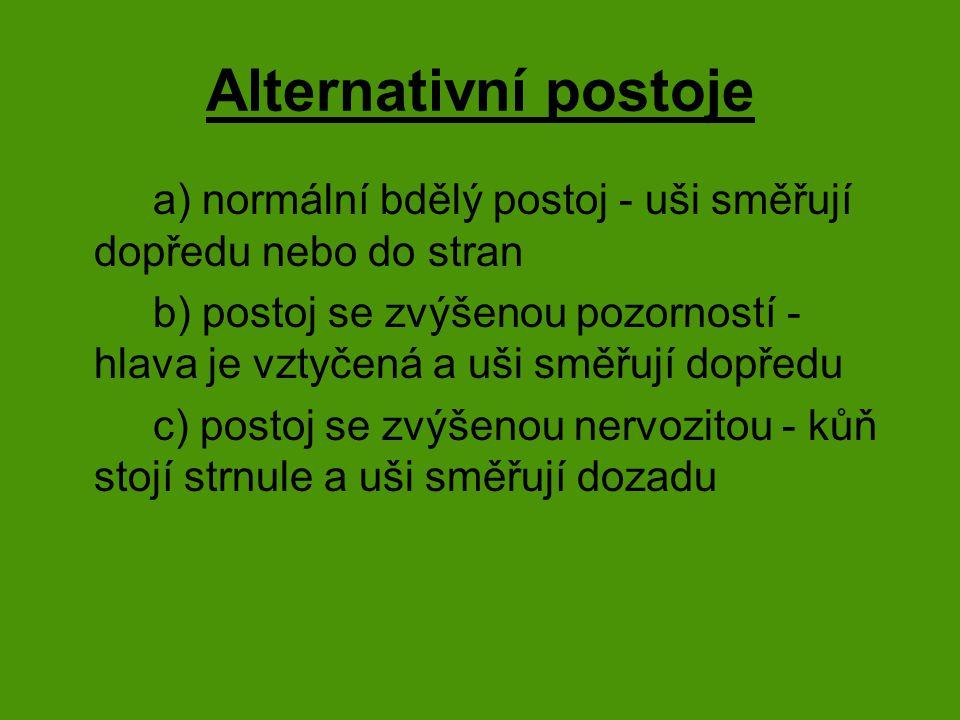 Alternativní postoje a) normální bdělý postoj - uši směřují dopředu nebo do stran.