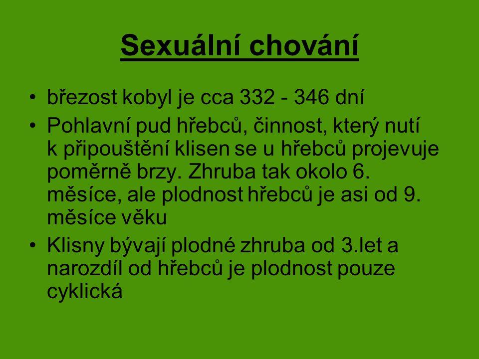 Sexuální chování březost kobyl je cca 332 - 346 dní