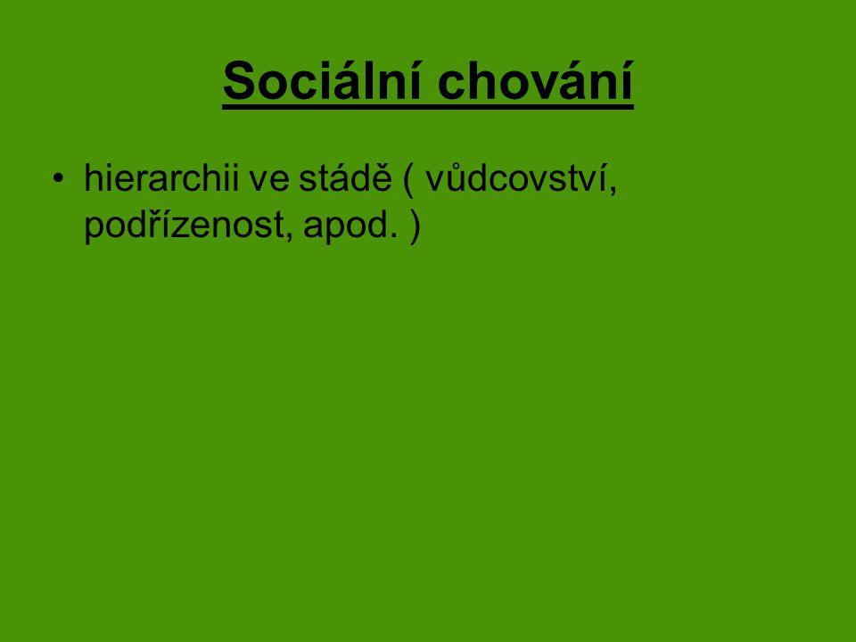 Sociální chování hierarchii ve stádě ( vůdcovství, podřízenost, apod. )