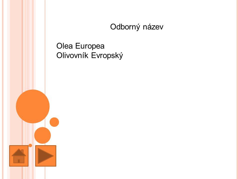 Odborný název Olea Europea Olivovník Evropský