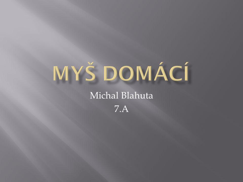 Myš domácí Michal Blahuta 7.A
