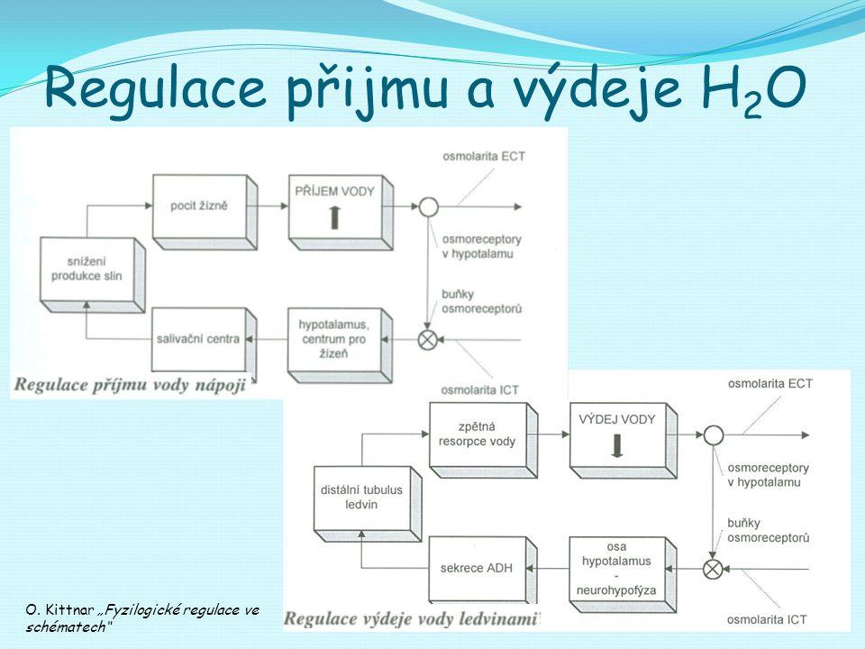 Regulace přijmu a výdeje H2O