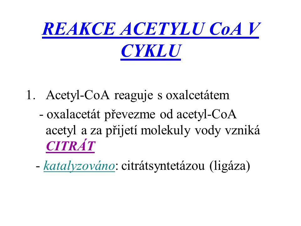 REAKCE ACETYLU CoA V CYKLU