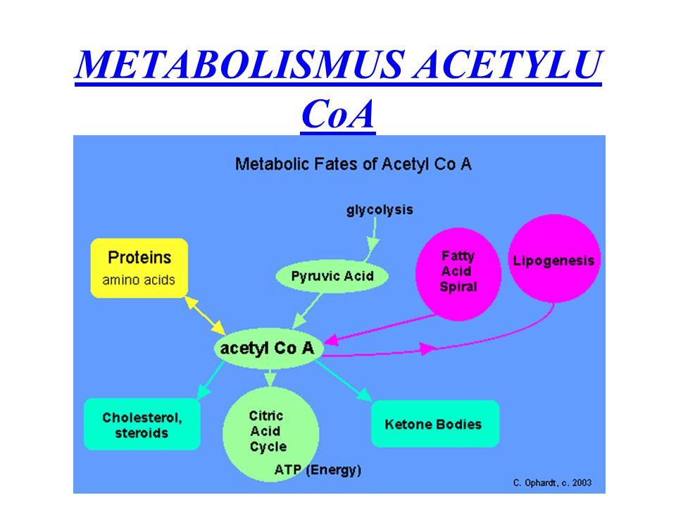 METABOLISMUS ACETYLU CoA