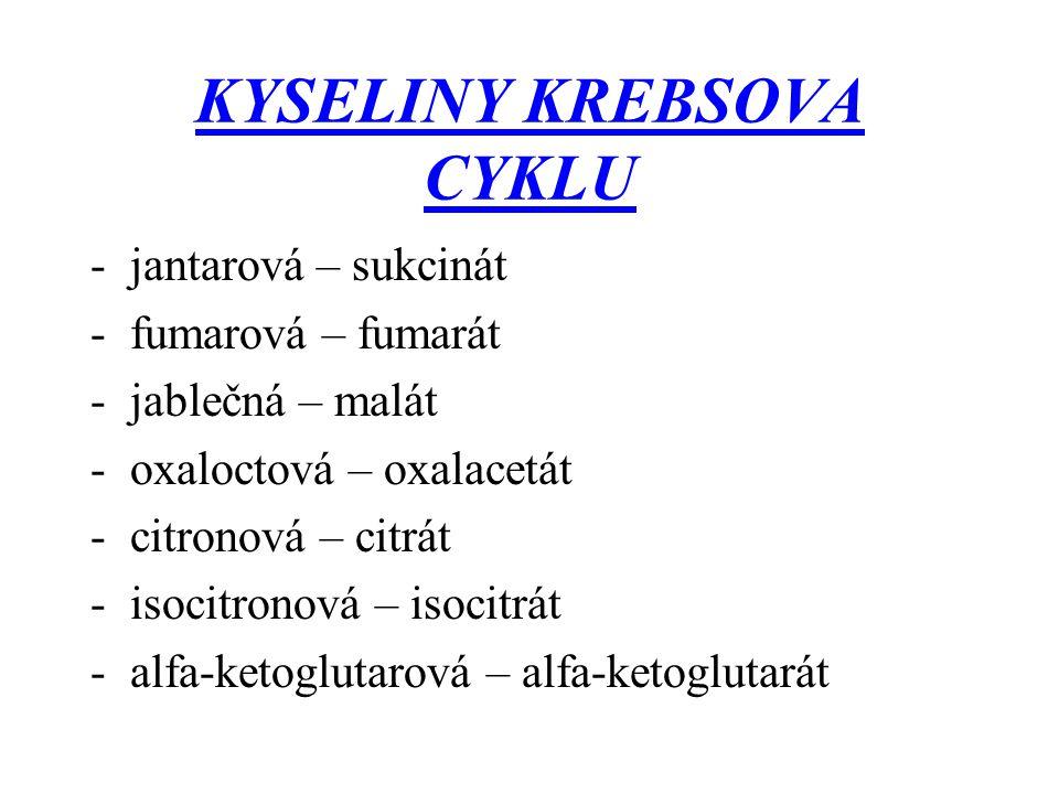 KYSELINY KREBSOVA CYKLU