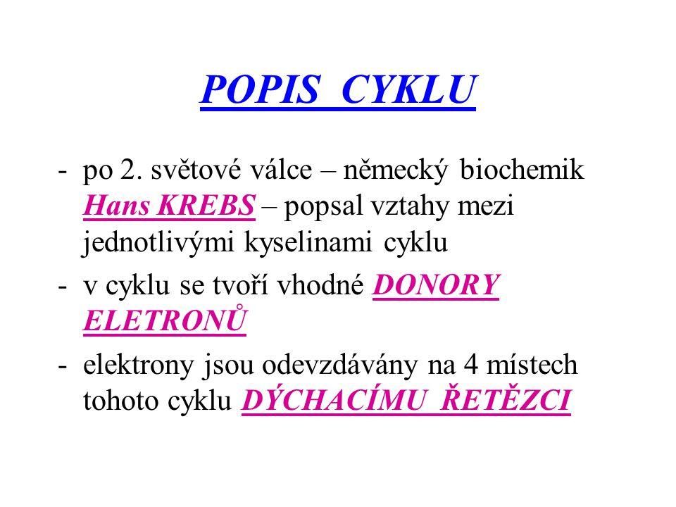 POPIS CYKLU po 2. světové válce – německý biochemik Hans KREBS – popsal vztahy mezi jednotlivými kyselinami cyklu.