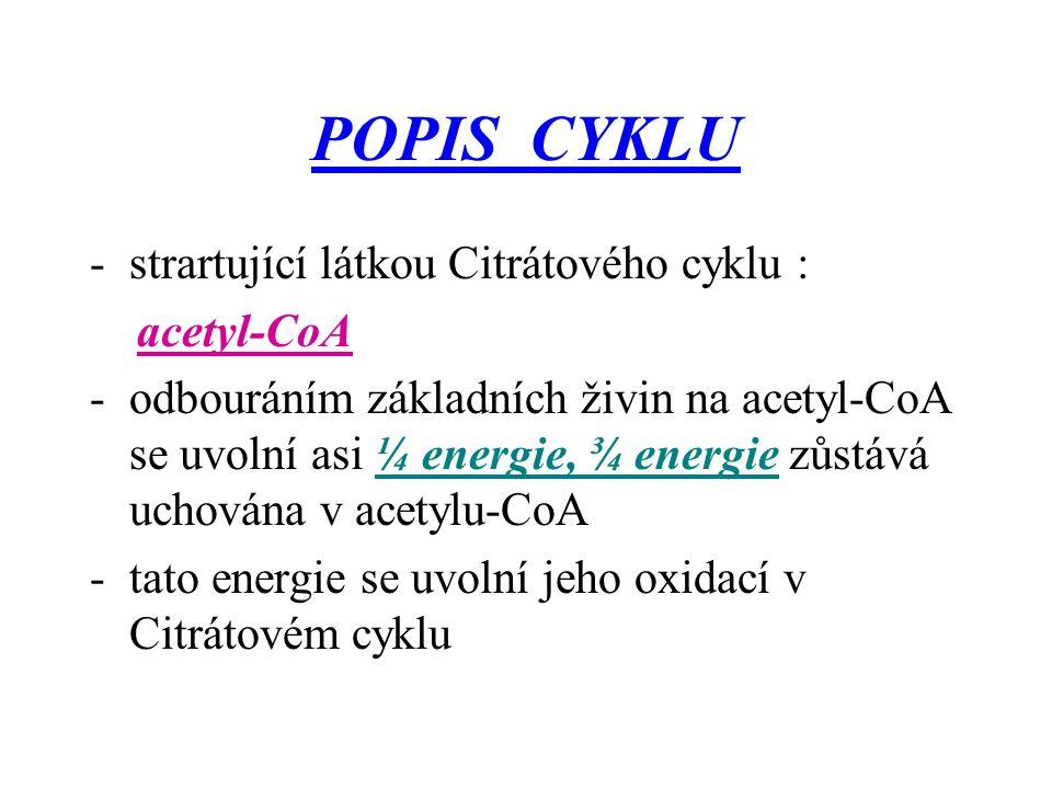 POPIS CYKLU strartující látkou Citrátového cyklu : acetyl-CoA