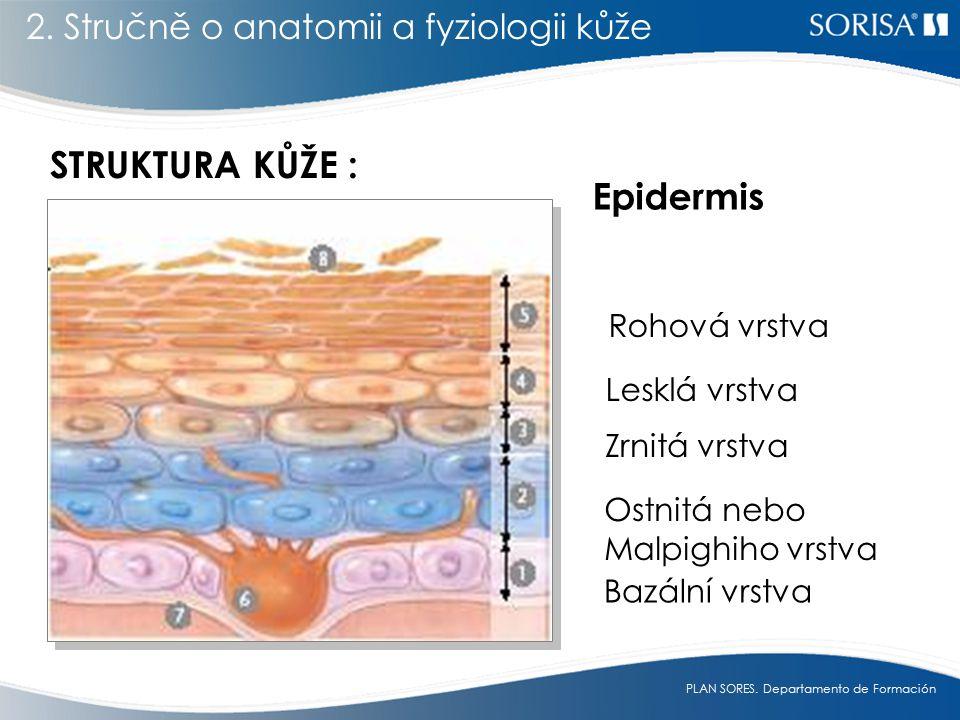 STRUKTURA KŮŽE : Epidermis 2. Stručně o anatomii a fyziologii kůže