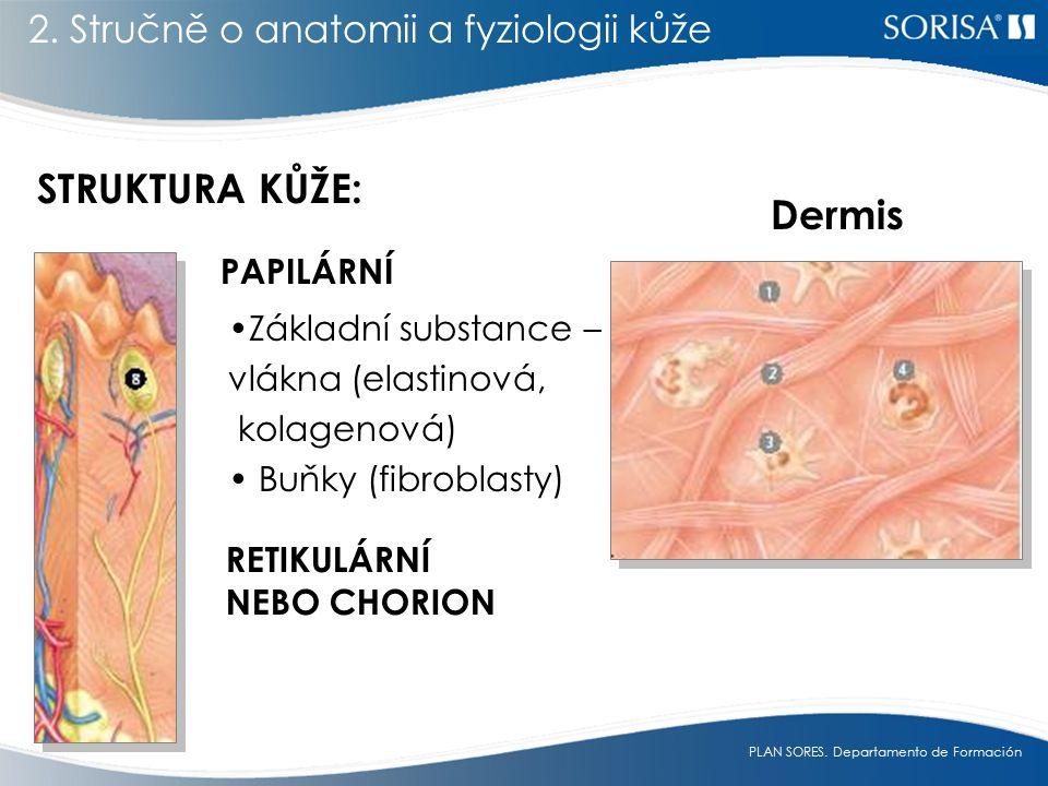 STRUKTURA KŮŽE: Dermis 2. Stručně o anatomii a fyziologii kůže