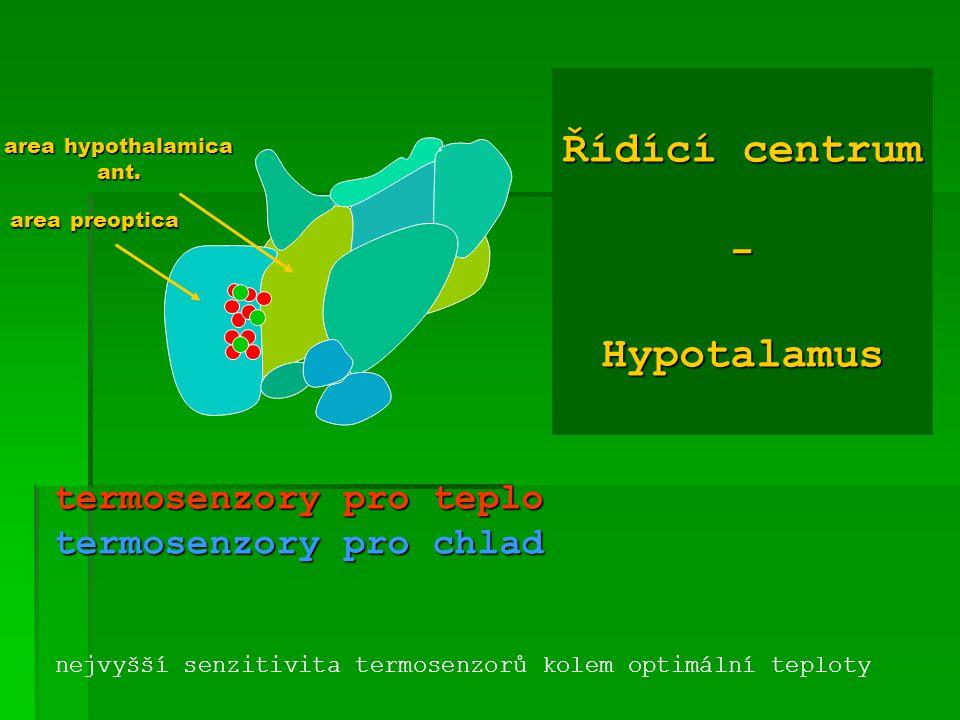 Řídící centrum - Hypotalamus