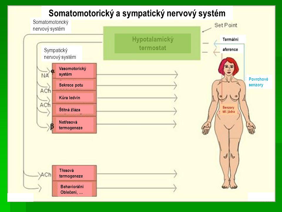 Somatomotorický a sympatický nervový systém
