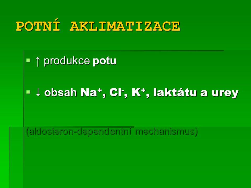 POTNÍ AKLIMATIZACE ↑ produkce potu