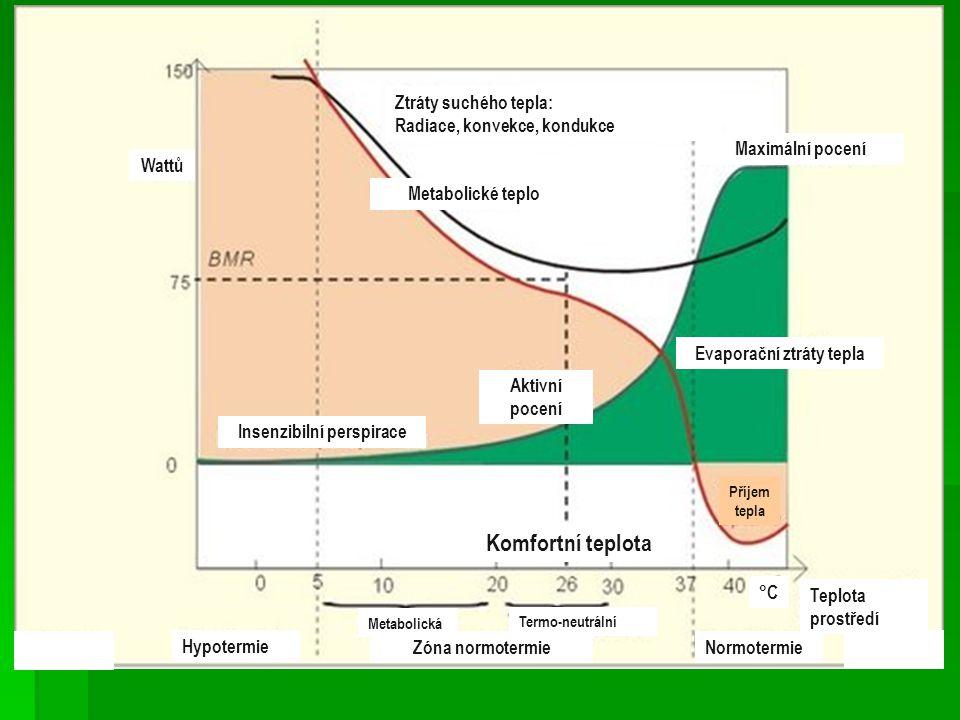 Evaporační ztráty tepla Insenzibilní perspirace