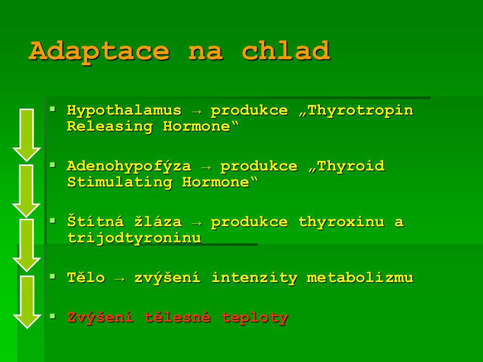 "Adaptace na chlad Hypothalamus → produkce ""Thyrotropin Releasing Hormone Adenohypofýza → produkce ""Thyroid Stimulating Hormone"