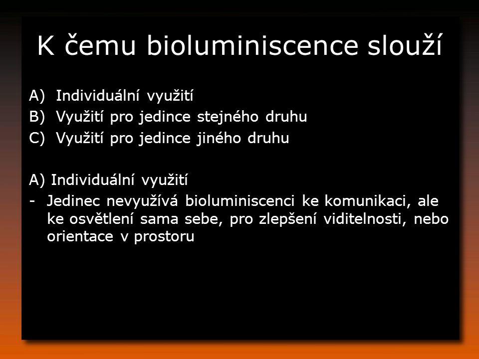 K čemu bioluminiscence slouží