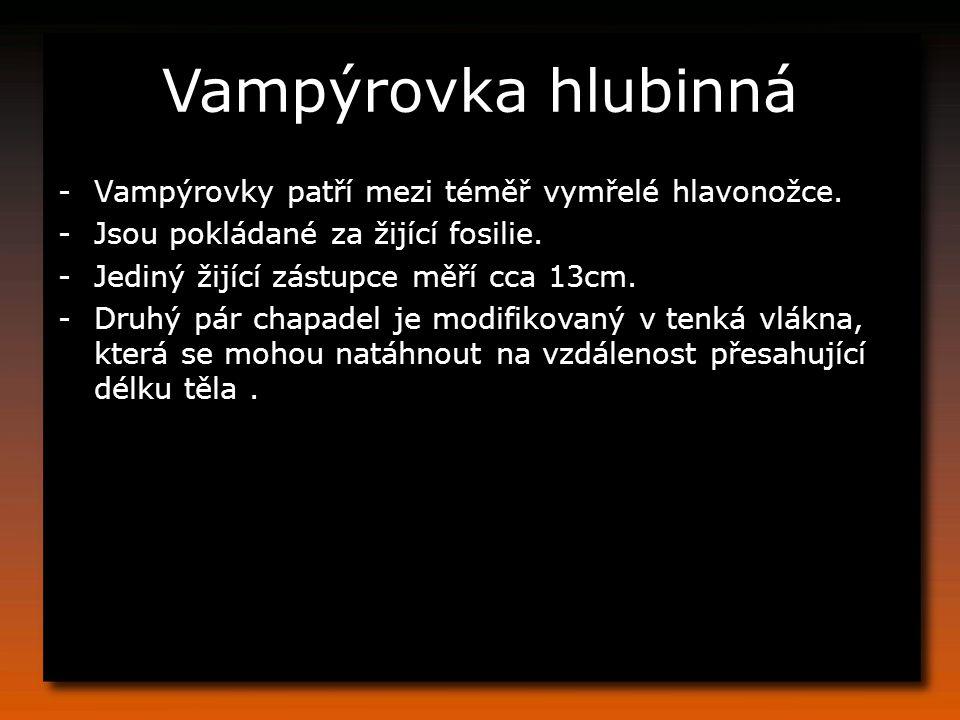 Vampýrovka hlubinná Vampýrovky patří mezi téměř vymřelé hlavonožce.