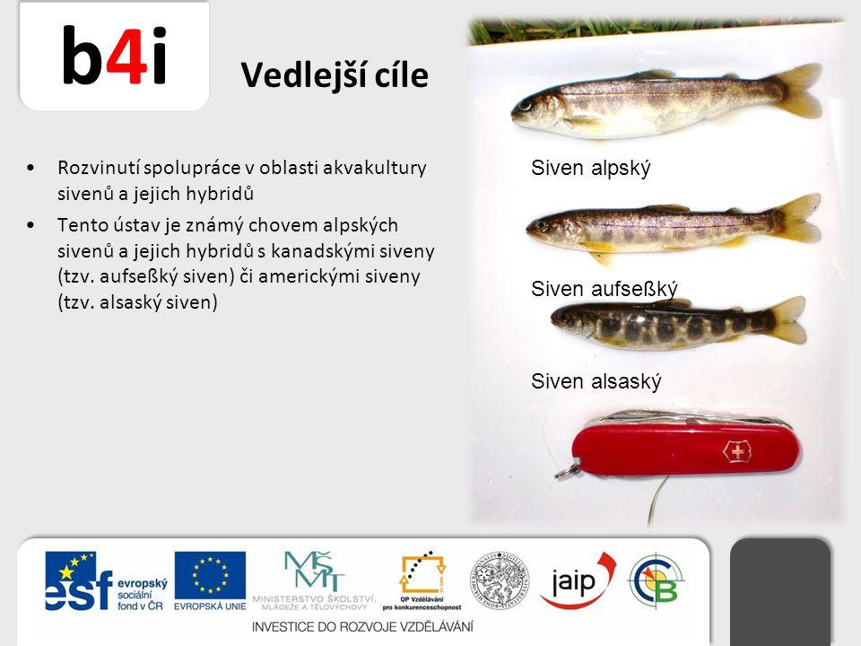 Vedlejší cíle Rozvinutí spolupráce v oblasti akvakultury sivenů a jejich hybridů.