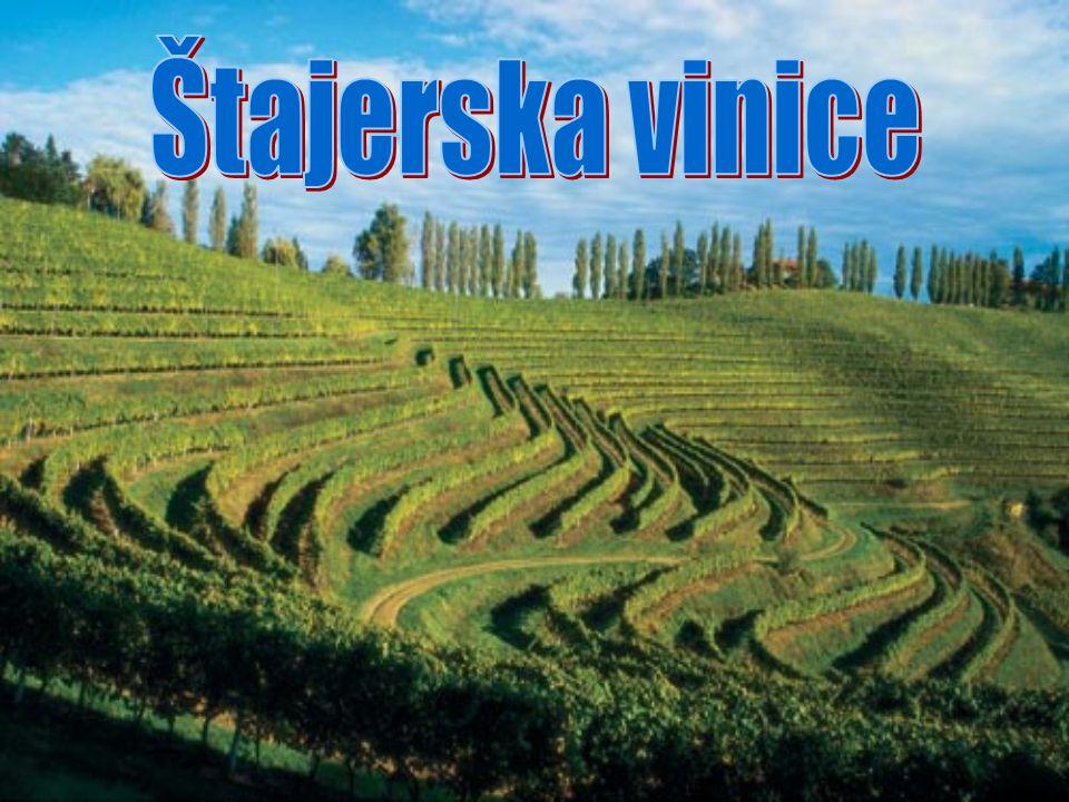 Štajerska vinice