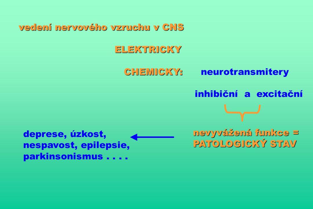 vedení nervového vzruchu v CNS