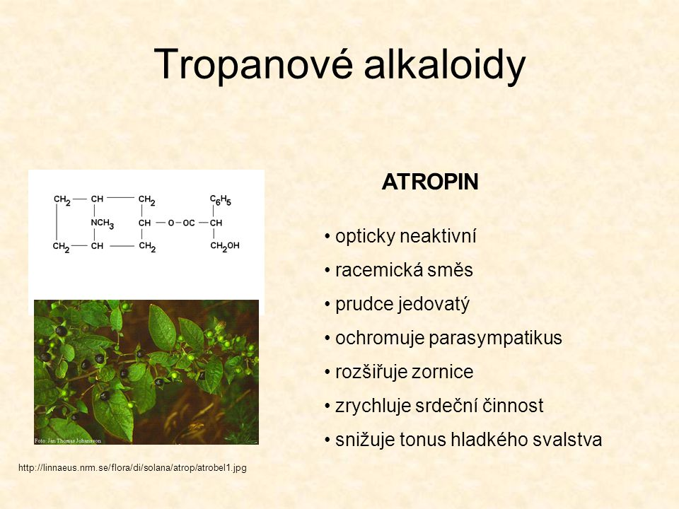 Tropanové alkaloidy ATROPIN opticky neaktivní racemická směs
