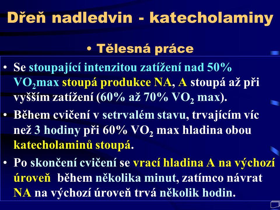 Dřeň nadledvin - katecholaminy
