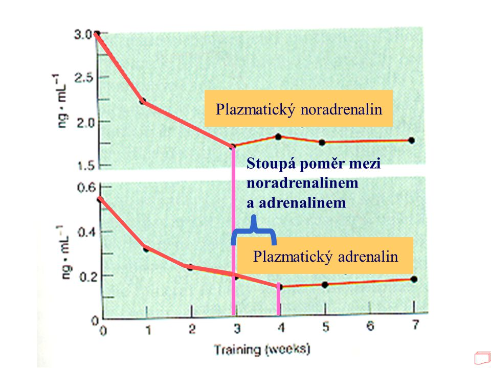 Plazmatický noradrenalin