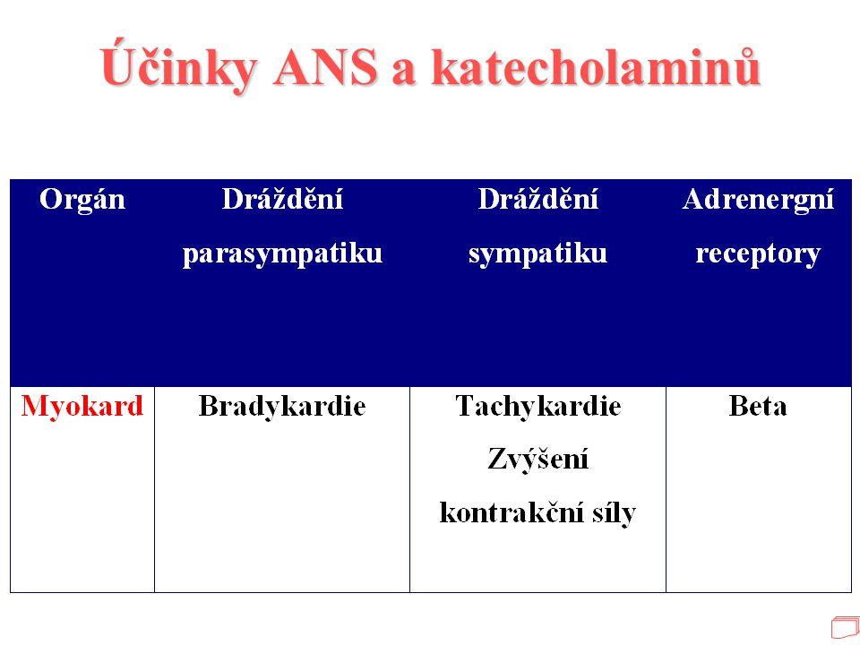 Účinky ANS a katecholaminů