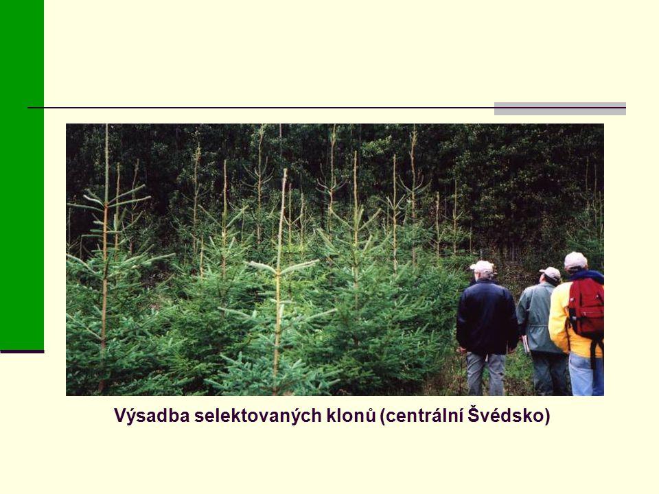 Výsadba selektovaných klonů (centrální Švédsko)