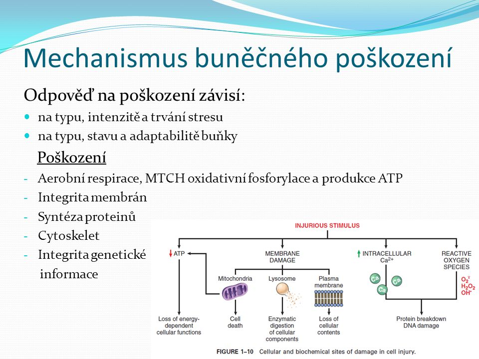 Mechanismus buněčného poškození