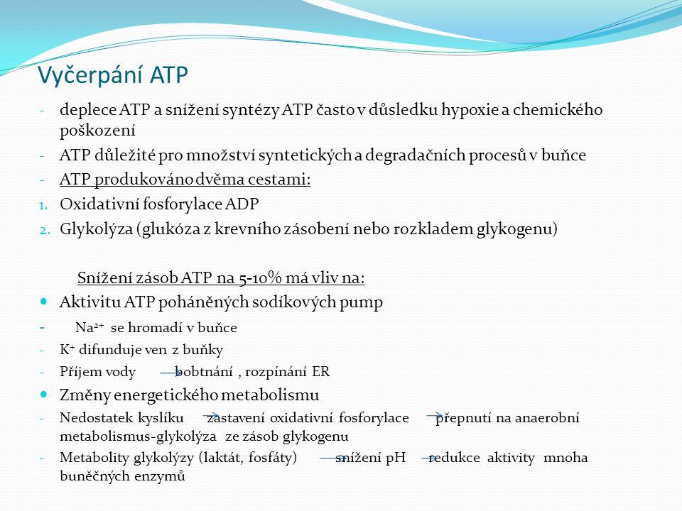 Vyčerpání ATP deplece ATP a snížení syntézy ATP často v důsledku hypoxie a chemického poškození.