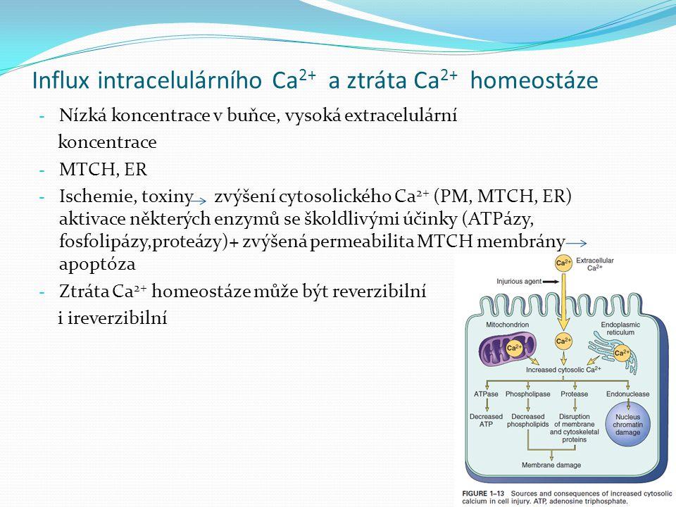 Influx intracelulárního Ca2+ a ztráta Ca2+ homeostáze
