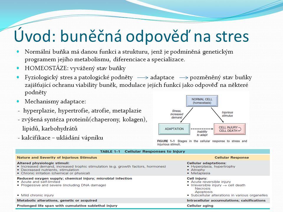 Úvod: buněčná odpověď na stres