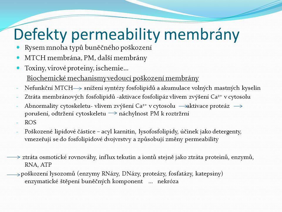 Defekty permeability membrány