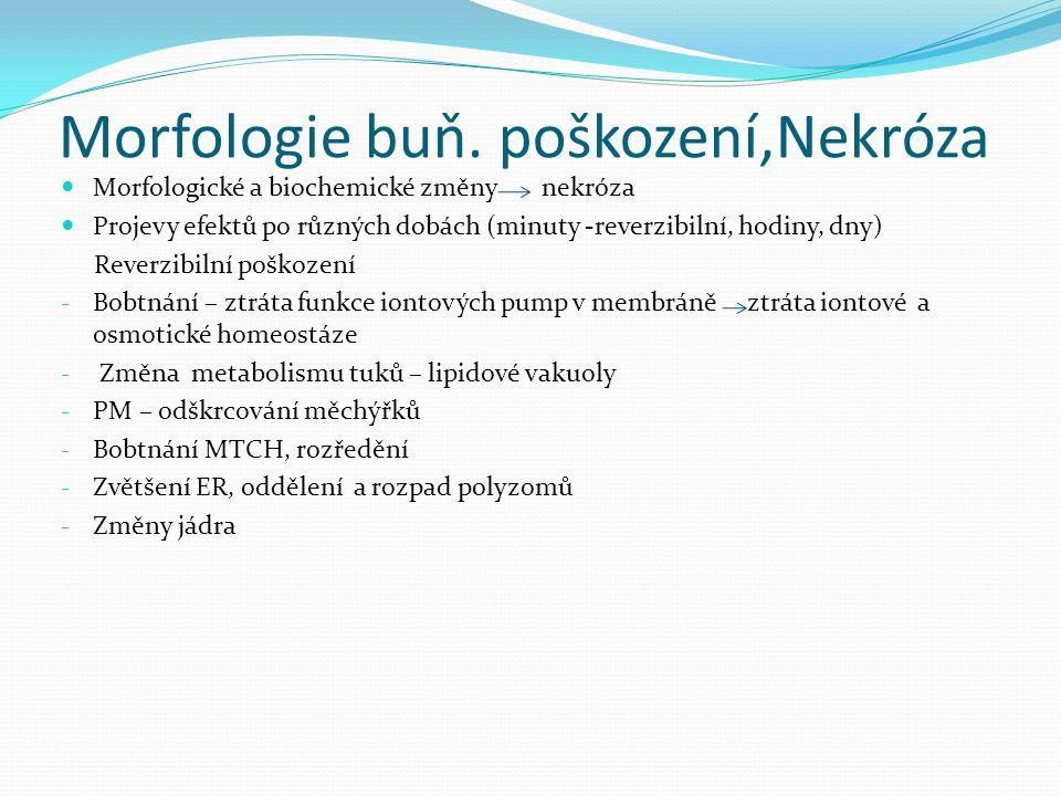 Morfologie buň. poškození,Nekróza