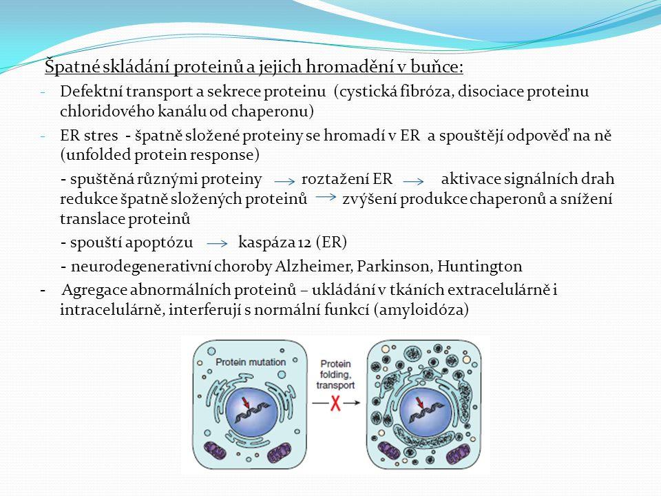 Špatné skládání proteinů a jejich hromadění v buňce: