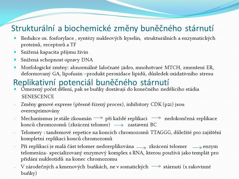 Strukturální a biochemické změny buněčného stárnutí