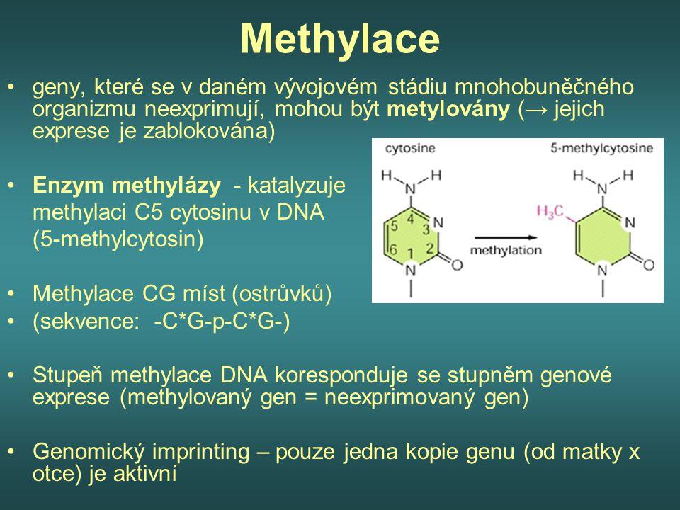 Methylace geny, které se v daném vývojovém stádiu mnohobuněčného organizmu neexprimují, mohou být metylovány (→ jejich exprese je zablokována)