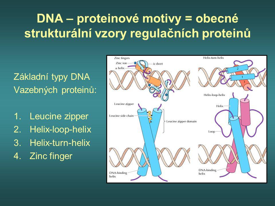 DNA – proteinové motivy = obecné strukturální vzory regulačních proteinů