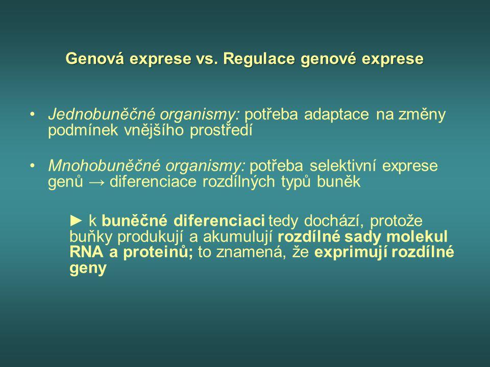 Genová exprese vs. Regulace genové exprese