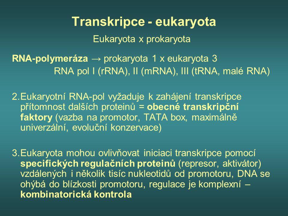 Transkripce - eukaryota