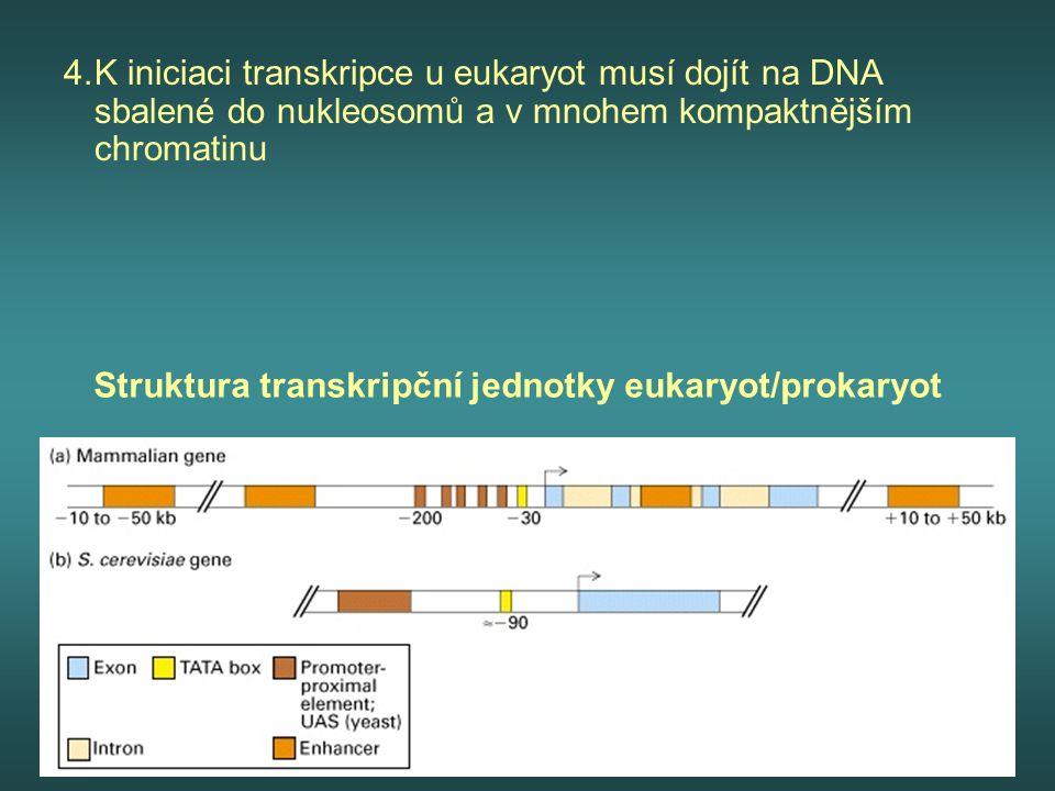 Struktura transkripční jednotky eukaryot/prokaryot