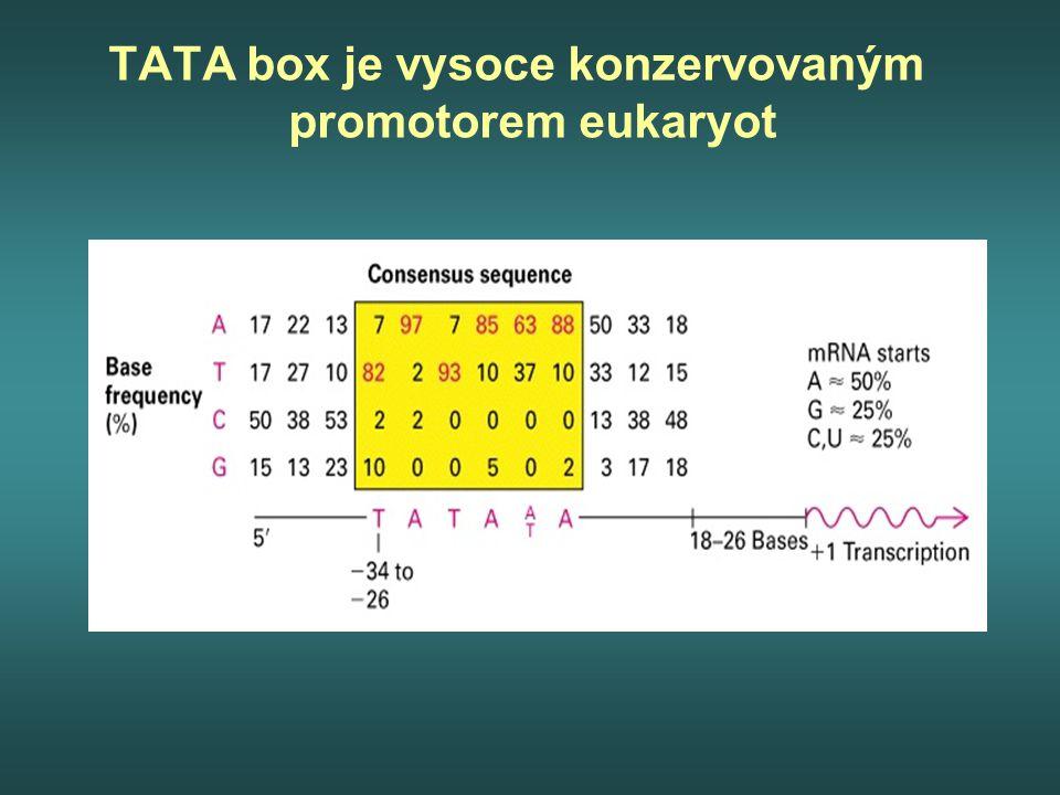 TATA box je vysoce konzervovaným promotorem eukaryot