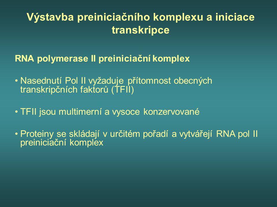 Výstavba preiniciačního komplexu a iniciace transkripce