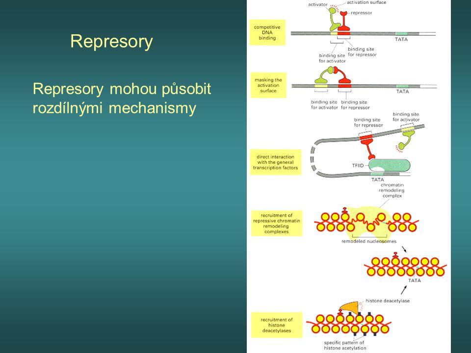 Represory Represory mohou působit rozdílnými mechanismy