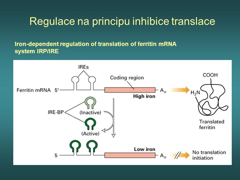 Regulace na principu inhibice translace