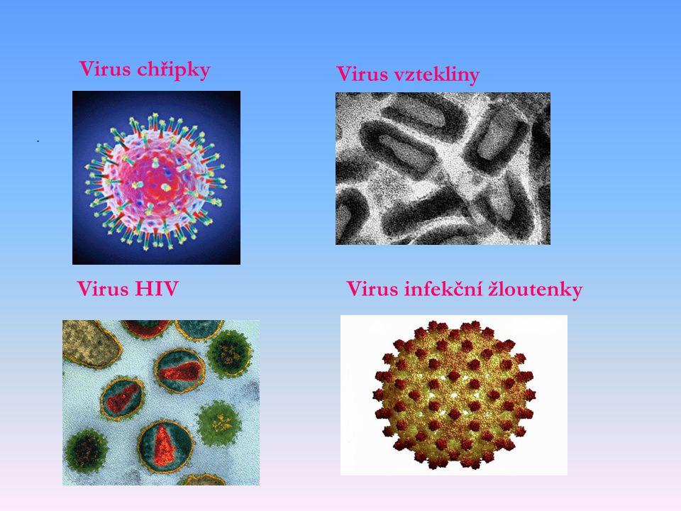 Virus infekční žloutenky