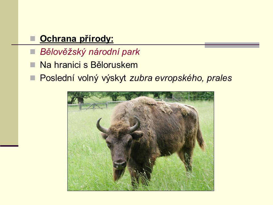 Ochrana přírody: Bělověžský národní park. Na hranici s Běloruskem.