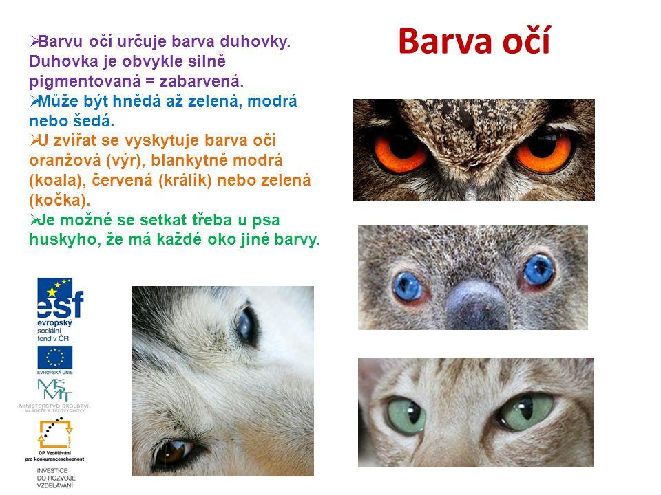 Barva očí Barvu očí určuje barva duhovky. Duhovka je obvykle silně pigmentovaná = zabarvená. Může být hnědá až zelená, modrá nebo šedá.