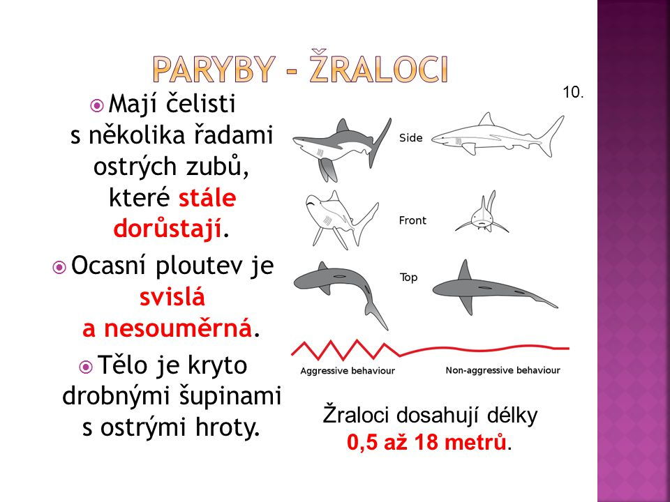 PARYBY - ŽRALOCI 10. Mají čelisti s několika řadami ostrých zubů, které stále dorůstají. Ocasní ploutev je svislá a nesouměrná.